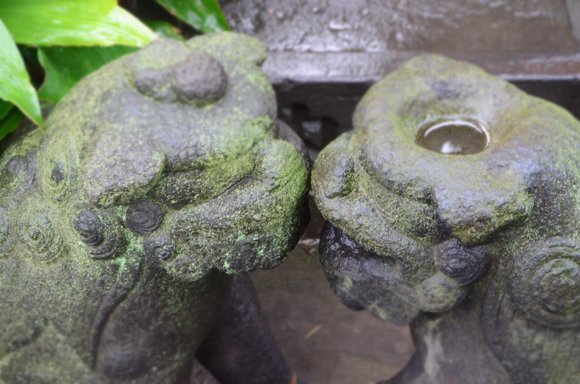 Hikawa Jinja ( 氷川神社 )6